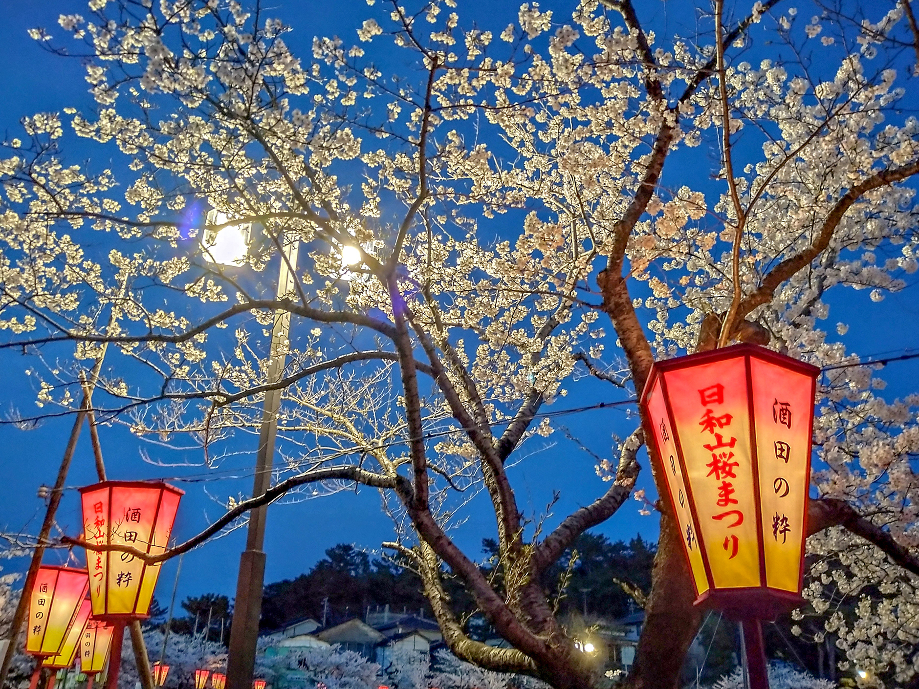 酒田日和山公園桜まつり